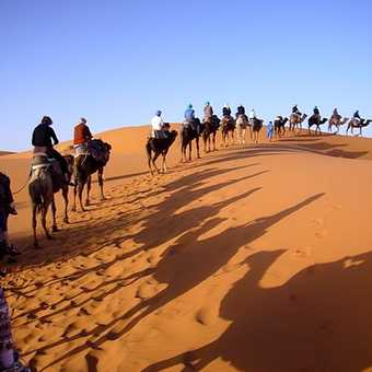 Camel journey in Sahara