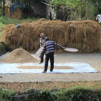 Clearing the chaff - Nepal style