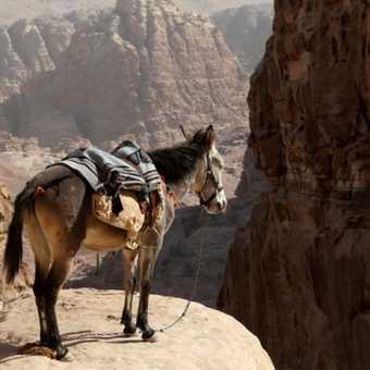 Brave donkey.