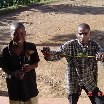 Kid & chameleons