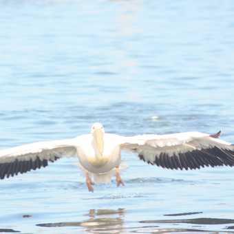 Low flying bird