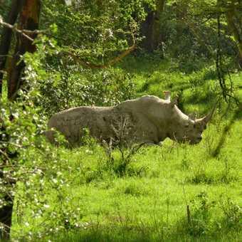 Black Rhino Nakuru
