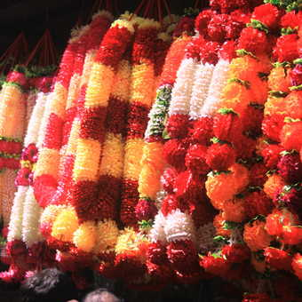 Dehli garlands