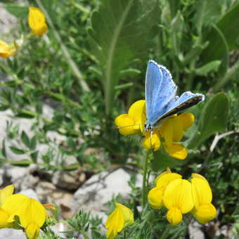 Wild flowers and butterflly at Paklenica