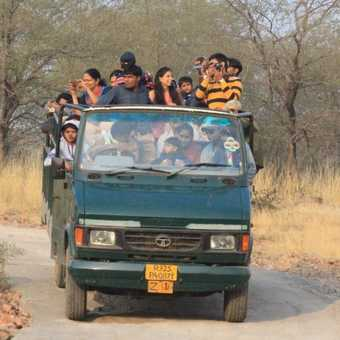 Safari transport