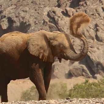 Elephant sandbath