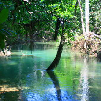 Jungle backwater