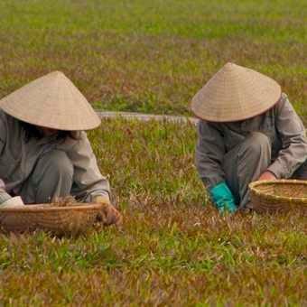 Gardeners in Hanoi