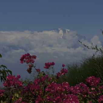 View of Kili from Kia Lodge - the night before meeting the Group flight