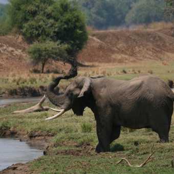 Elephant having mud bath