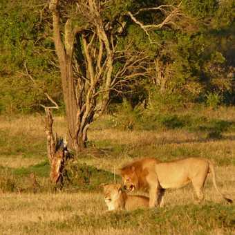 Mara N Conservancy Pride
