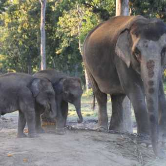 Elephants of Chitwan