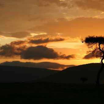sunset, masai mara