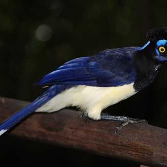 Wildlife at Igazu Falls