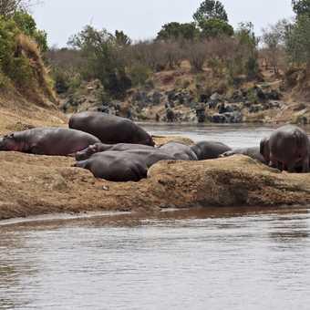 Hippo beach, Mara river