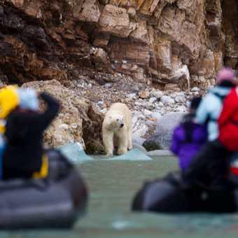 Polar bear and Exodus zodiacs