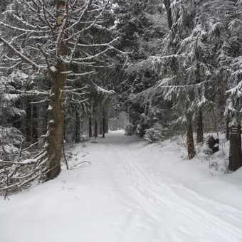 Wintry Forests