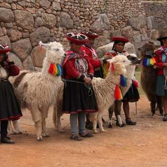 Peruvian women and alpacas