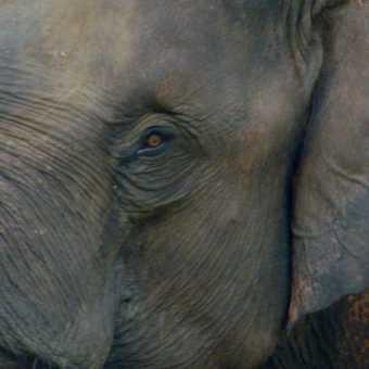 Chitwan - Elephant Breeding Centre