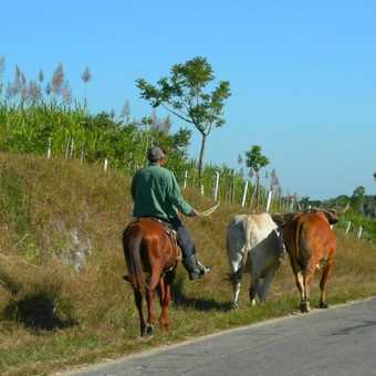 A common sight in rural Cuba