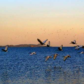 lake flock