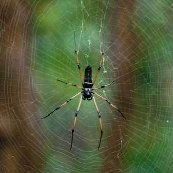 Spider in Prgapur