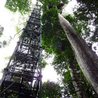 40 Metres up.  The tower gives access to a platform on top of the adjacent tree for a great view ove