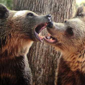 Liberty Bear Sanctuary