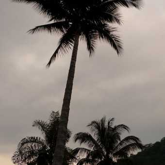 Palm trees in Sierra Maestra Mountains