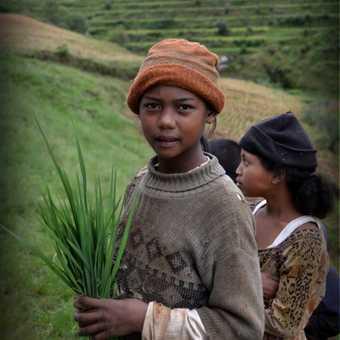Around the rice fields