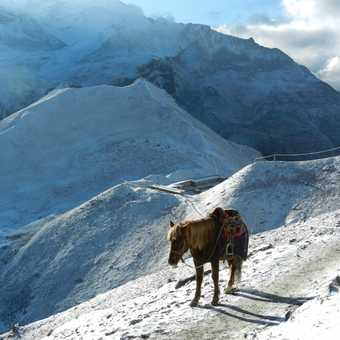 Lonely horse on Thorong La
