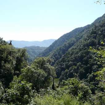 Last trekking day back to Yoksum - lots of green and plenty of sun