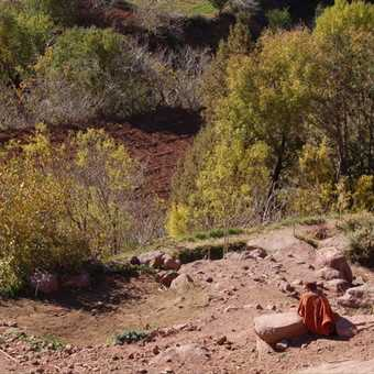 camel taking a break, near Merzouga.jpeg