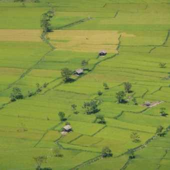 Rice fields on the drive towards Darjeeling