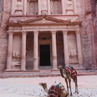 Camels in front of the Treasury