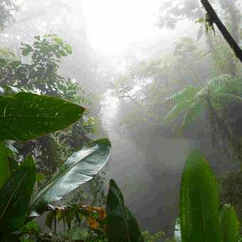 St Elena Cloud Forest