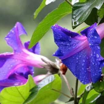 Flowers of Lake Bunyonyi.
