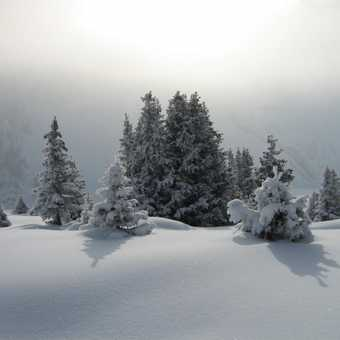 This is what I wanted to see, trees covered in deep snow.