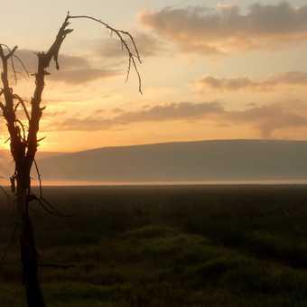 Zebra herd at dawn - L Nakuru