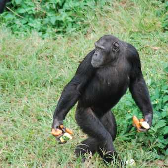 Mgambe Island chimp sanctuary