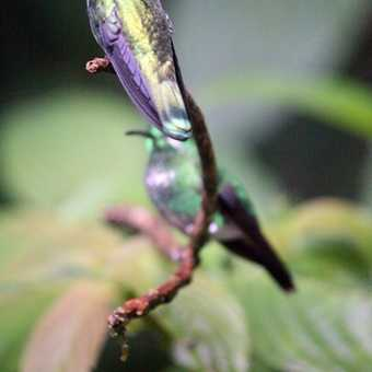Another hummer
