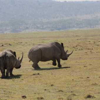 Rhino on the Run