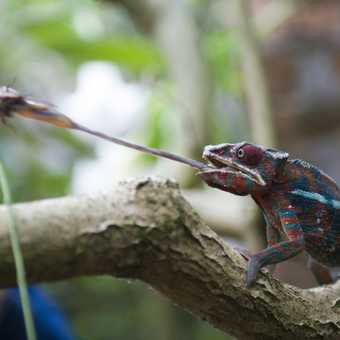 Madagascar 32