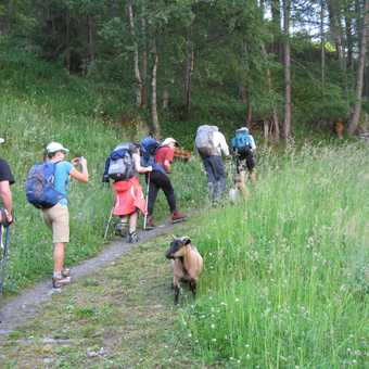 trek from Tashe with local wildlife