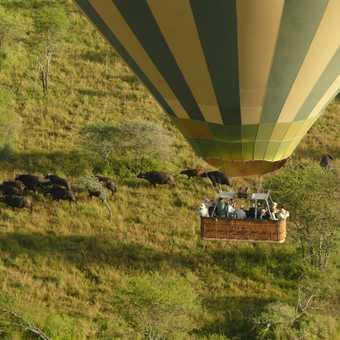 Balloon and Buffalo