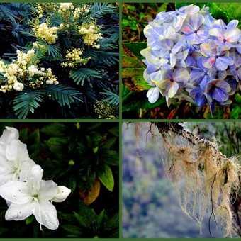Plant Collage Caldeirao Verde Walk