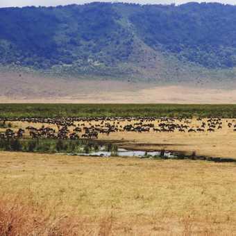 Ngorongoro marsh and crater rim
