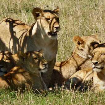 Olare Orok Conservancy Pride