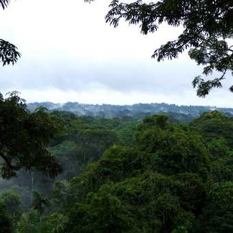The forest steams from the large amount of rain that feel during the preceeding 12 hours.  Taken fro