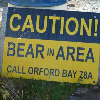 Caution Bears